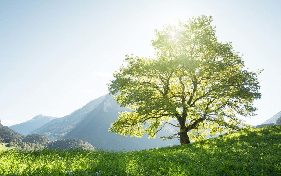 Et si les arbres nous ressemblaient un peu…