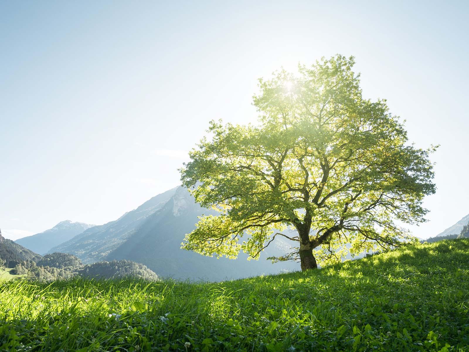 Et si les arbres nous ressemblaient un peu… - Sekoia City